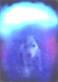 aura photograph of dog